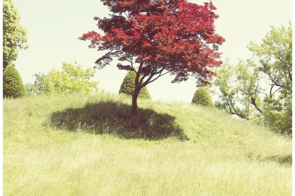 Red Three Meditation